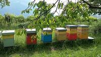 Bando finanziam. ann. 2020/2021-miglioramento condizioni produzione e commercalizzazione prodotti apicoltura-domende entro 30 novembre 2020
